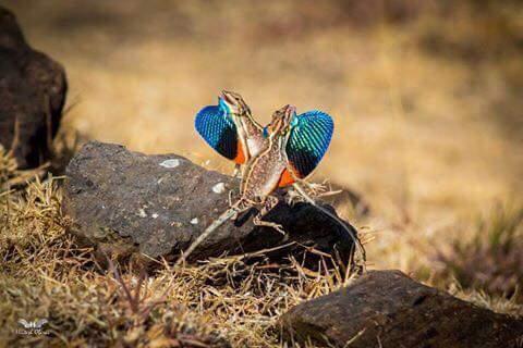 Nagar's Very Own Wildlife Photographer Bags Prestigious Camarena Academy Photography Awards.